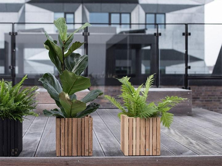 planters copy